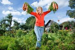 Ernte der organischen Karotten lizenzfreie stockfotografie