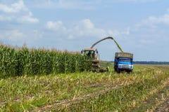Ernte der saftigen Maissilage durch einen Mähdrescher und einen Transport durch LKWs, für das Legen auf Tierfutter stockfotografie