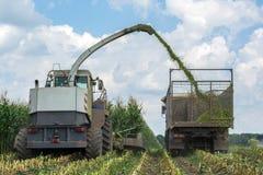 Ernte der saftigen Maissilage durch einen Mähdrescher und einen Transport durch LKWs, für das Legen auf Tierfutter stockfoto