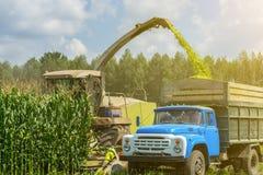 Ernte der saftigen Maissilage durch einen Mähdrescher und einen Transport durch LKWs, für das Legen auf Tierfutter lizenzfreies stockfoto