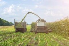 Ernte der saftigen Maissilage durch einen Mähdrescher und einen Transport durch LKWs, für das Legen auf Tierfutter lizenzfreie stockfotos