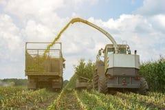 Ernte der saftigen Maissilage durch einen Mähdrescher und einen Transport durch LKWs, für das Legen auf Tierfutter stockbilder