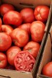 Ernte der Tomaten am Landwirtmarkt stockfoto