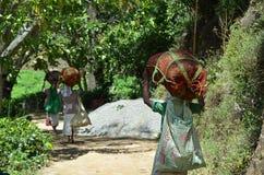Ernte des Tees durch Frau mit Taschen auf ihrem Kopf Lizenzfreie Stockfotografie