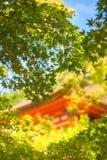 Ernte durch die Blätter an der goldenen Stunde zu einem historischen Gebäude in Kyoto lizenzfreies stockfoto