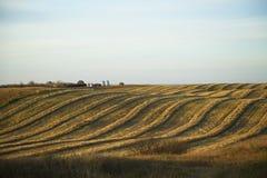 Ernte-Hügel Stockfotografie