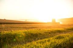 Ernte im Sonnenuntergang Stockfotos