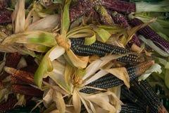 Ernte-indischer Mais-Hintergrund Stockfotos