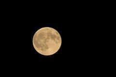 Ernte-Mond Stockfotos