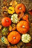 Ernte- oder Danksagungshintergrund mit Kürbissen und Stroh stockbild