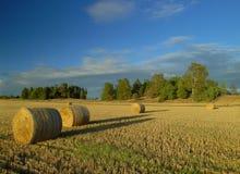 Ernte in Schweden Lizenzfreie Stockbilder