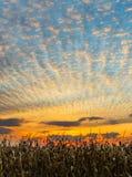 Ernte-Sonnenuntergang stockfotografie