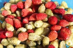 Ernte von Erdbeeren Stockbild