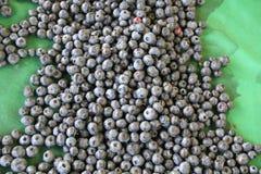Ernte von frischen acai Beeren Stockbild