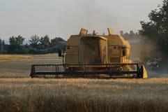 Ernte von Getreide lizenzfreie stockbilder