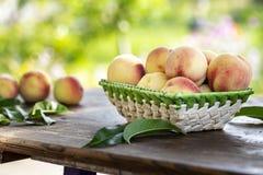 Ernte von reifen Pfirsichen lizenzfreie stockbilder