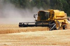 Ernte-Weizen Stockbilder