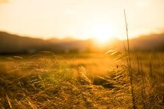 Erntefeld an der goldenen Stunde lizenzfreies stockfoto