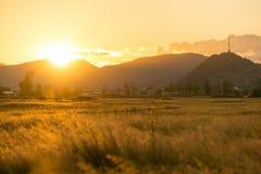 Erntefeld an der goldenen Stunde lizenzfreie stockfotografie