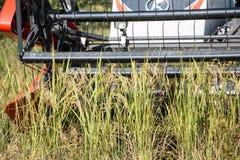 Erntemaschine in der Arbeit Stockfoto