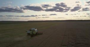 Erntemaschine der oberen Ansicht erfasst Getreide auf dem Goldgebiet stock video