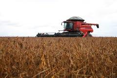 Erntemaschine, die das Ernten des Sojabohnenfeldes macht lizenzfreies stockbild