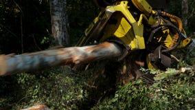 Erntemaschine, die in der Mitte eines Waldes arbeitet stock footage