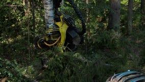 Erntemaschine, die in einem Wald arbeitet stock video footage