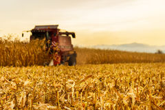 Erntemaschine, die im Hintergrund auf Maisfeld arbeitet Stockbild