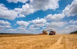 Erntemaschine, die Korn entlädt Lizenzfreie Stockfotografie