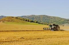 Erntemaschine, die Weizenfeld erntet stockfotografie