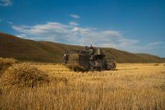 Erntemaschine entfernt die gereifte Weizenernte auf dem Feld Stockbilder