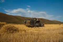 Erntemaschine entfernt die gereifte Weizenernte auf dem Feld Lizenzfreie Stockbilder