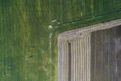 Erntemaschine erntet eine Ernte auf einem Gebiet nahe bei einem grünen Feld mit Mais ukraine Schattenbild des kauernden Geschäfts Lizenzfreie Stockbilder