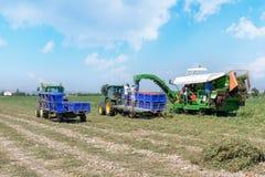 Erntemaschine sammelt Tomaten in den Plastikkästen auf einem Traktor im Freien Leute bei der Arbeit lizenzfreie stockfotos