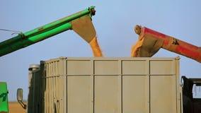 Erntemaschinen entladen Korn in den LKW Nahaufnahme stock video footage