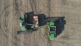 Erntemaschinen gießt frisch Sojabohne zum Anhänger für Transport, landwirtschaftliches Feld der Brummenansicht stock video