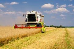 Erntemaschinenmähdreschenweizen am sonnigen Sommertag Lizenzfreie Stockbilder