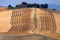 Ernten in Calvignano Italien Stockfoto