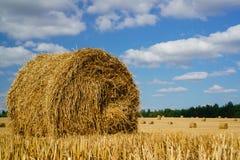 Ernten der Felder Landwirtschaftsfeld againt blauer Himmel Ländliche Natur in Lizenzfreies Stockfoto