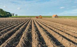 Ernten der Kartoffeln Stockfotografie