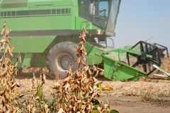 Ernten der Soyabohnen lizenzfreies stockbild