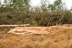 Ernten in der Zweigplantage Lizenzfreies Stockfoto