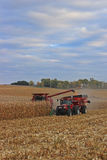 Ernten des Getreidefelds Lizenzfreies Stockfoto