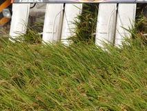 Ernten des Mähdreschers Stockfotos
