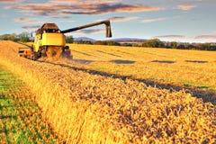 Ernten des Mähdreschers auf dem Weizengebiet Lizenzfreies Stockfoto