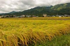 Ernten des Reises in der Präfektur Nagano Lizenzfreies Stockbild