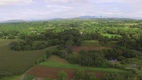 Ernten des Reises und des Mais angebaut an der Seite von ruhigen düsteren Flussbänken stock video footage