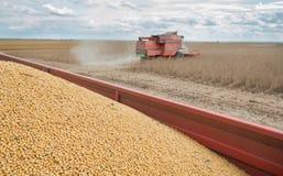 Ernten des Sojabohnenölbohnenfeldes lizenzfreies stockfoto