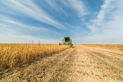 Ernten des Sojabohnenölbohnenfeldes mit Mähdrescher Stockfoto